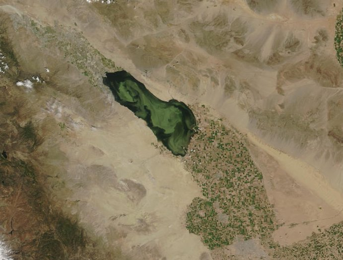 Source: https://desertsearat.wordpress.com/2011/12/07/algal-blooms-fish-die-offs-oh-my/