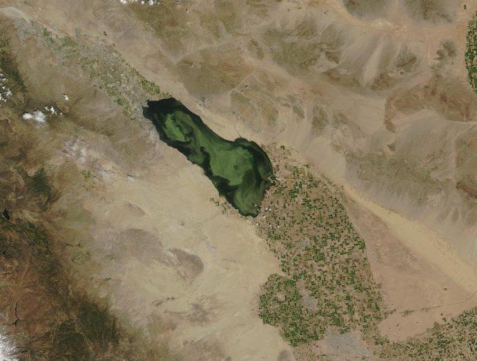 Source: https://desertsearat.wordpress.com/2011/12/07/algal-blooms-fish-die-offs-oh-my/