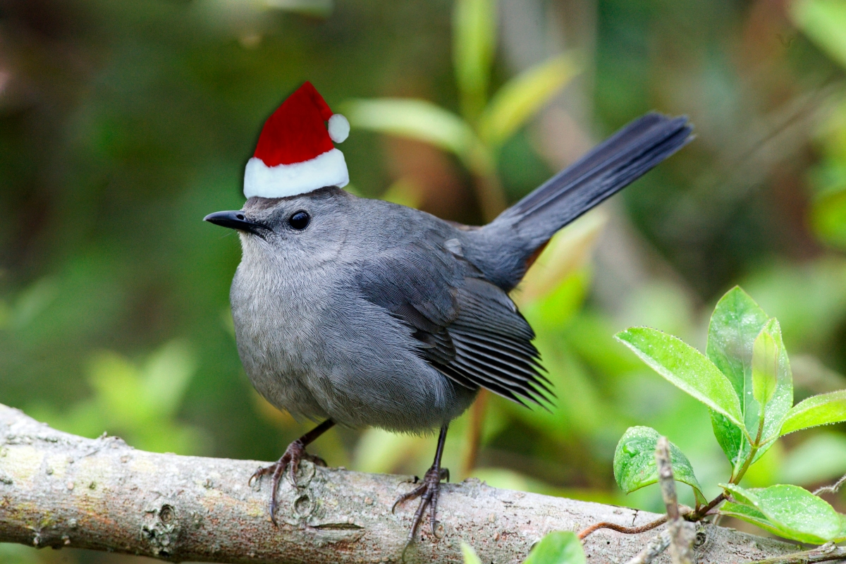 Join us for the Christmas Bird Count!