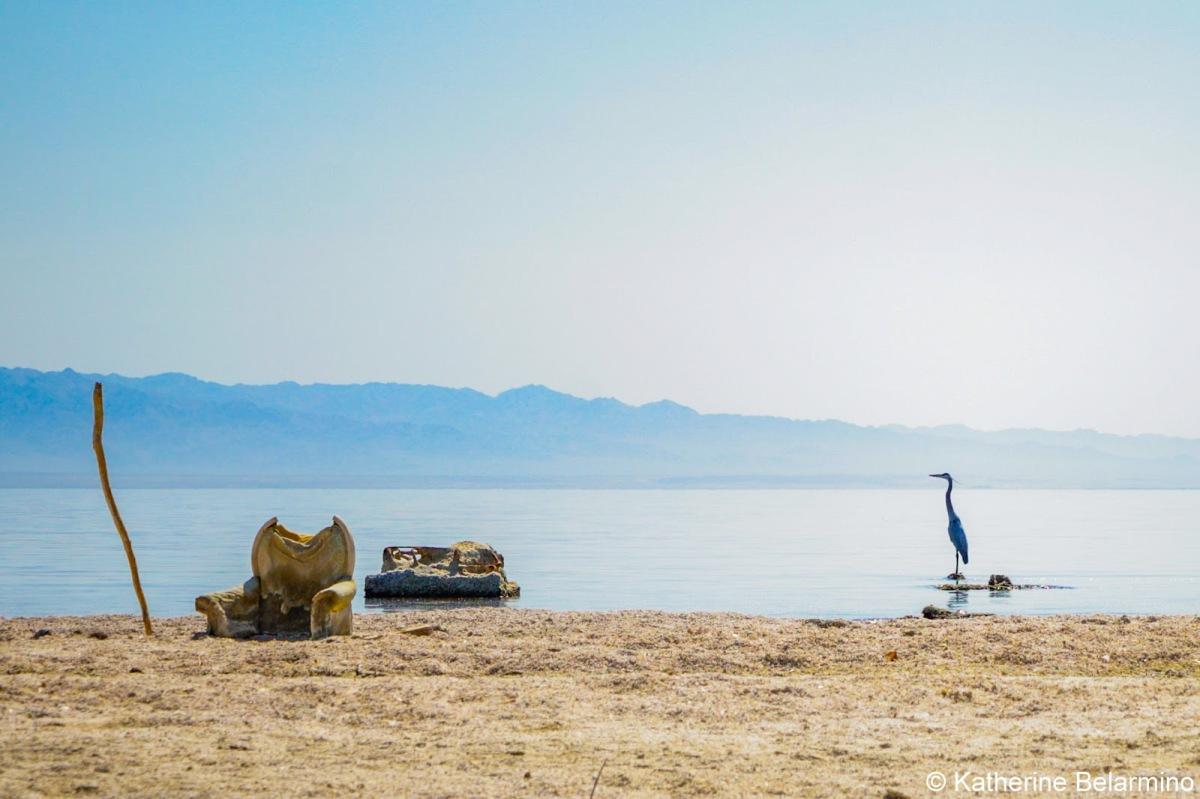 Shrinking Shorelines and the SaltonSea